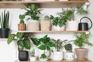 11-BEST-INDOOR-PLANTS-KEEP-YOU-HEALTHY